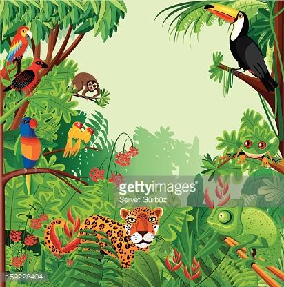 Raiinforest